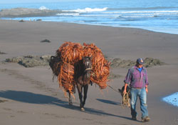 Ride a horse to get around Pichilemu