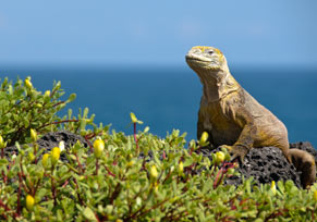 Study Spanish on the Galápagos Islands - © John MacIlwinen