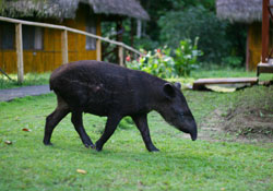 Study Spanish and animals at the Amazon Language School
