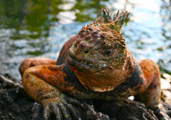 Learn Spanish on the Galapagos Islands
